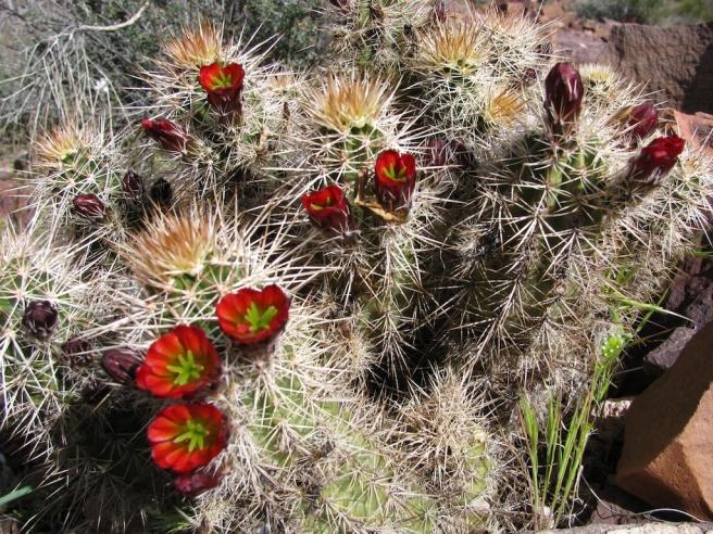 Cholla Cactus.jpg