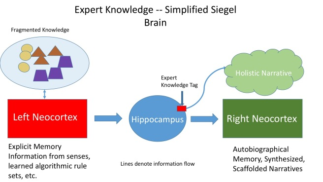 siegel-integration-figures-expert-brain